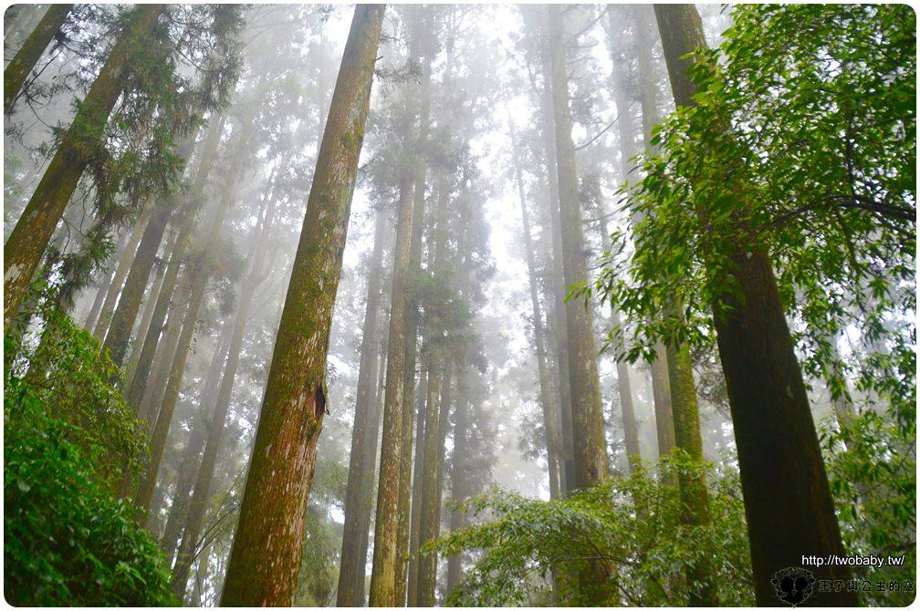 嘉義阿里山頂湖景點|頂湖自然生態園區-頂湖環村步道 焙仔桶林道(綠色隧道)